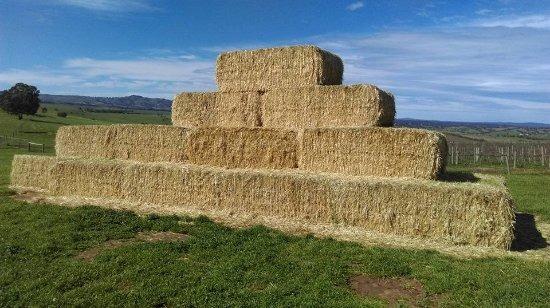 the-haystack